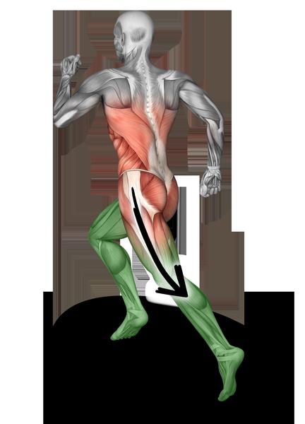 Anatomie eines Läufers hinten